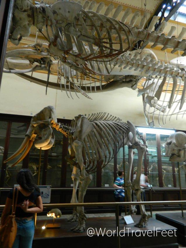 Esqueletos de elefante y ballena.