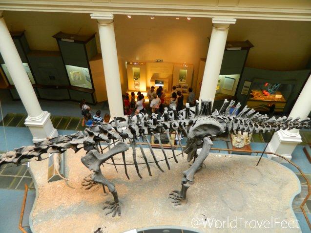 Fósil en el Museo de Ciencias Naturales