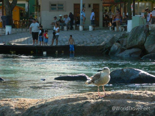 En la barra se pueden ver peces a simple vista, es por eso que las gaviotas acechan a sus presas desde las rocas.