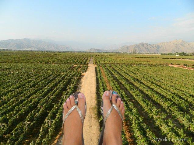 Caminando la Viña Tacama