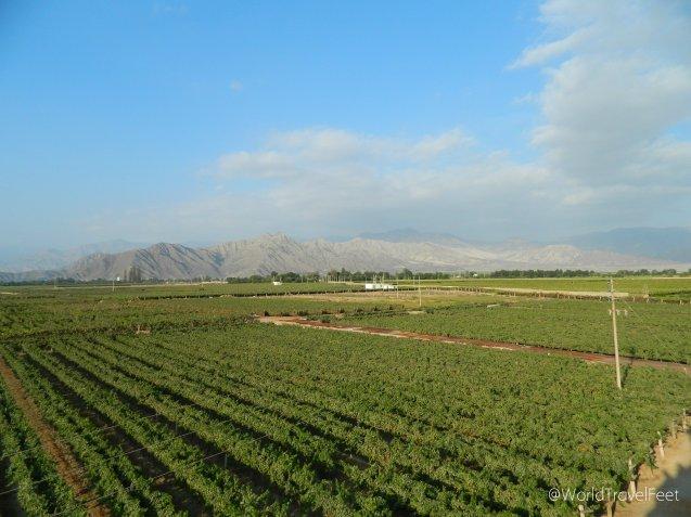 Campos verdes que alegran la vista en una zona desértica.