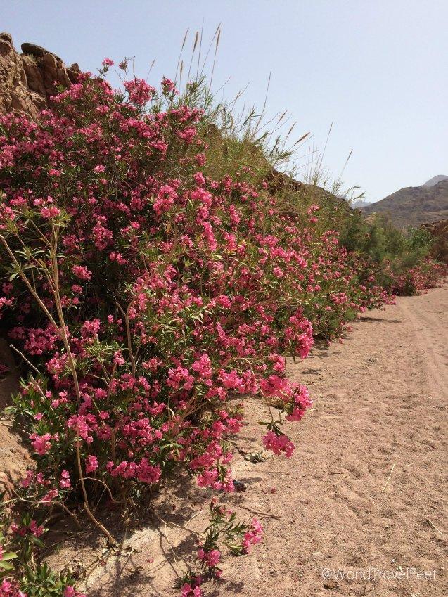 Desierto floreado en plena primavera.