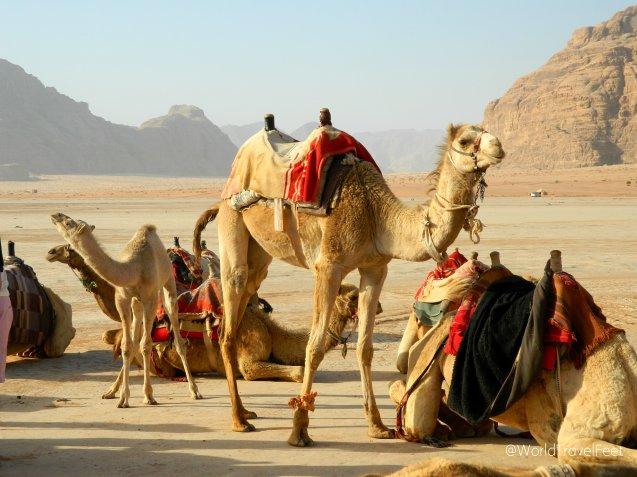 Empezando el día con un paseo en camello.